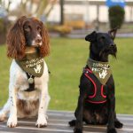 Exciting new collaboration unveiled with the Scottish Prison Service and the Dementia Dog Project.