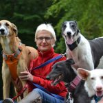 Rehomed Dogs gallery