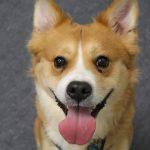 Rescue Dog Training Programme