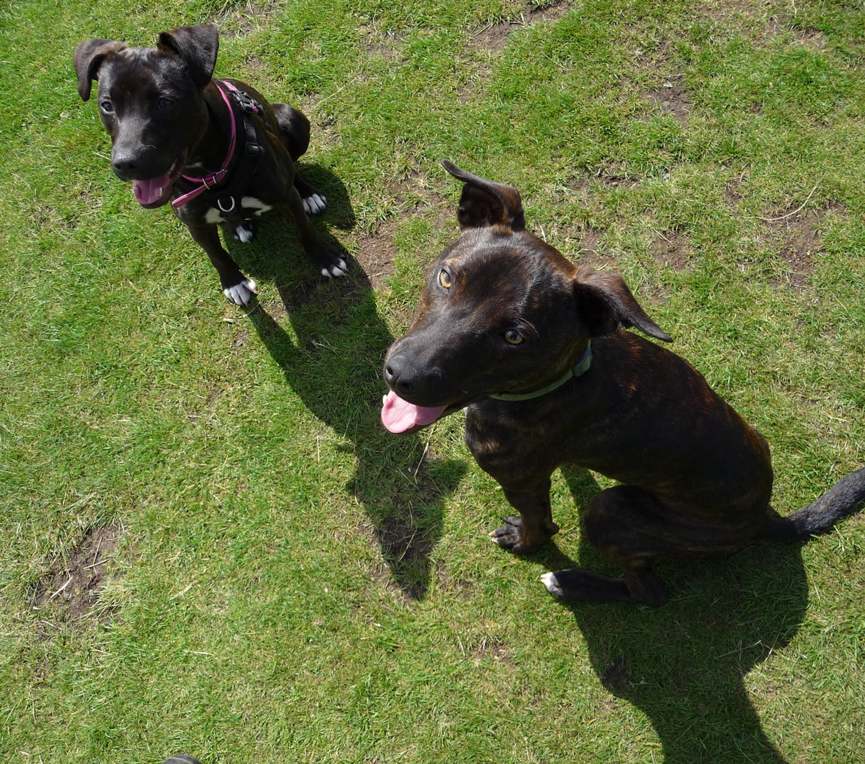 Renzo and Bounce, Dog Aid Society Scotland