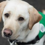 What do the assistance dogs learn?